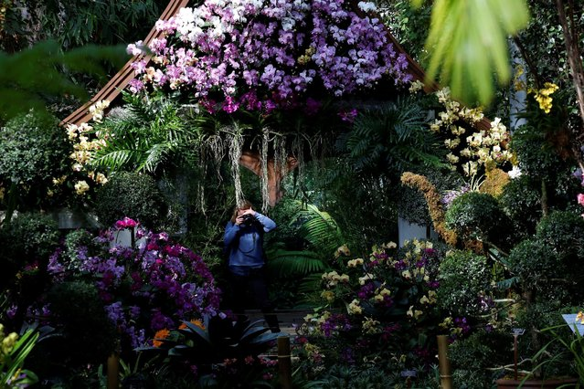 A guest photographs a display during the annual Orchid Show at the New York Botanical Garden in the Bronx, New York, U.S., February 16, 2017. (Photo by Brendan McDermid/Reuters)