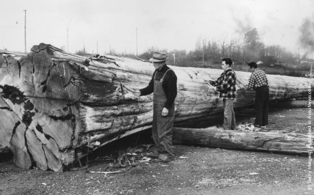 1957: Chief of the Kwakiuth Tribe of the British Columbian Indians making the first cuts on a huge log which will be carved into a Totem Pole to be presented to Her Majesty Queen Elizabeth II at the centennial celebrations in the Province of British Columbia, Cananda