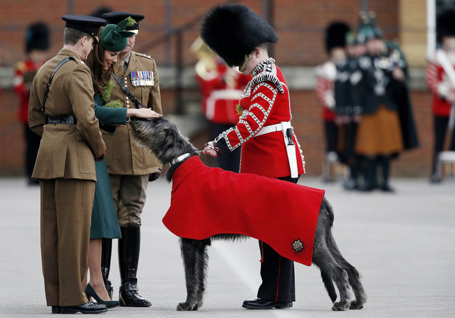 Britain's Catherine, Duchess of Cambridge (2-L) strokes the regimental mascot Irish Wolf Hound dog as she attends the St Patrick's Day parade with the 1st Battalion Irish Guards in Mons Barracks in Aldershot on March 17, 2014. (Photo by Adrian Dennis/AFP Photo)