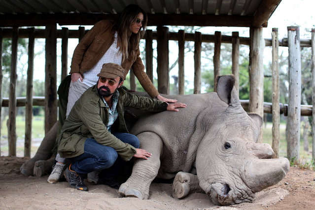 Evgeny Alexandrovich Lebedev is the London-based Russian owner of Lebedev Holdings Ltd, which owns the Evening Standard, the Independent and the patron of the Giants Club Summit and British actress and model Elizabeth Jane Hurley stroke a northern white rhino, only three of its kind left in the world, ahead of the Giants Club Summit of African leaders and others on tackling poaching of elephants and rhinos, Ol Pejeta conservancy near the town of Nanyuki, Laikipia County, Kenya, April 28, 2016. (Photo by Siegfried Modola/Reuters)