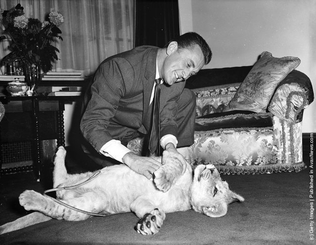 1960: American film star Kirk Douglas with a lion cub called Spartacus which was presented to him by the director of Southport zoo in appreciation of Douglas' film role