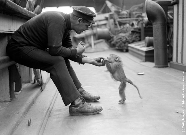 3rd June 1929:  A pet baboon on board the Friendship