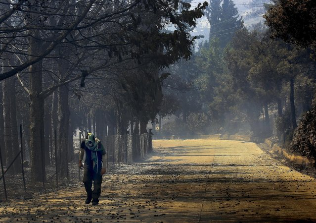A local resident walks through a burned area during a forest fire in an Athens neighborhood July 17, 2015. (Photo by Yannis Behrakis/Reuters)