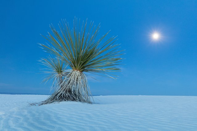 The barren landscapes of the south-western US provided inspiration for photographer David Clapp. He visited Nevada, New Mexico, Utah and Arizona as part of his project on other-worldy locations, with surreal results. Here: A yucca plant at moonrise in the sand of White Sand National Monument in Alamogordo, New Mexico. (Photo by David Clapp/Barcroft Images)
