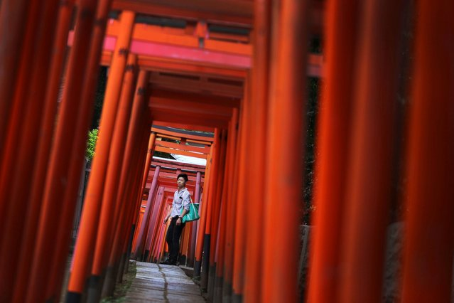 """A foreign visitor stands at a path lined of small shrine arches or """"Torii"""" gates at Nezu Shinto shrine in Tokyo, Thursday, July 3, 2014. Nezu Shrine is one of the oldest shrines in Tokyo. (Photo by Eugene Hoshiko/AP Photo)"""