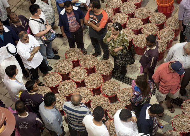 Customers bid on baskets of shrimp that are auctioned off daily in the Kuwait Fishmarket in Sharq, Kuwait City, August 25, 2015. (Photo by Stephanie McGehee/Reuters)