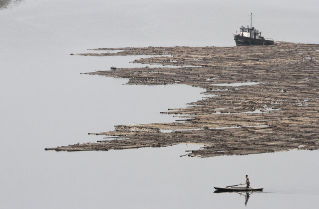 A North Korean man rows a boat past logs, which were tied together and transported by boats on the Yalu River near the North Korean city of Hyesan, Ryanggang province August 16, 2014. (Photo by Jacky Chen/Reuters)