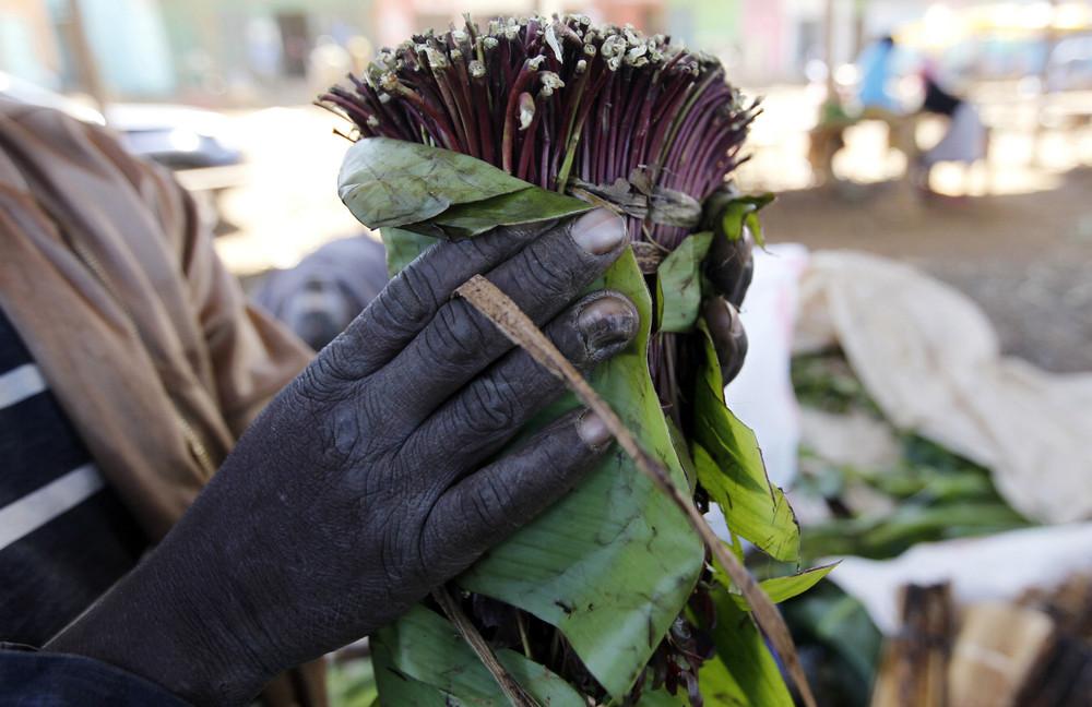 Somalia's Paradise Flower