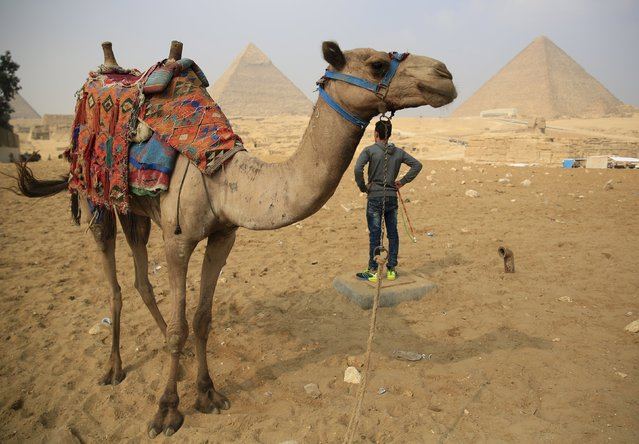 A worker looks on with his camel as he waits for tourists at the Giza Pyramids on the outskirts of Cairo, Egypt, November 8, 2015. (Photo by Amr Abdallah Dalsh/Reuters)