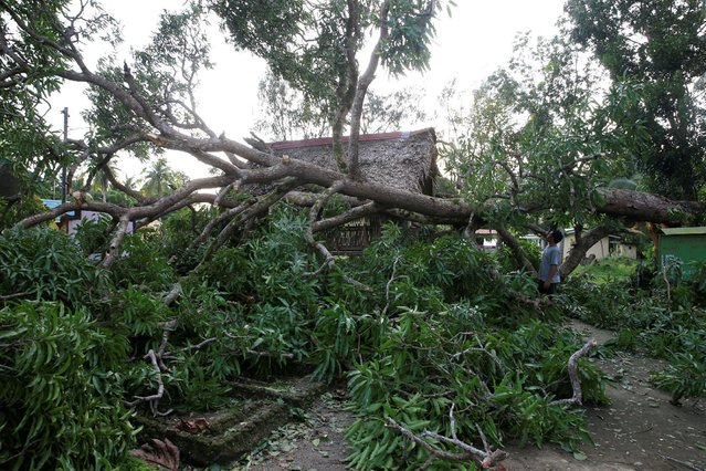 A resident looks at a tree uprooted by strong winds brought by Typhoon Nock-ten which cut through Camarines Sur, Bicol region, central Philippines December 26, 2016. (Photo by Erik De Castro/Reuters)