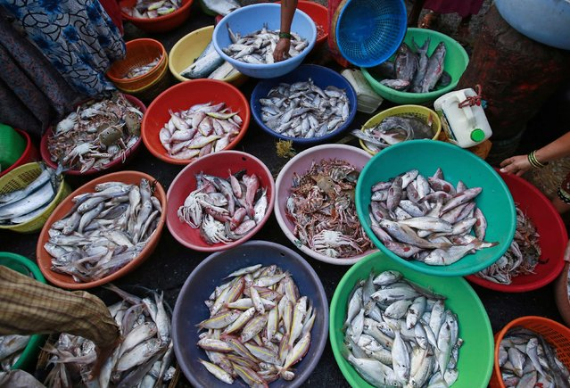 Fish and crabs are seen for sale at a wholesale market at a fish harbour in Mumbai, March 16, 2015. (Photo by Danish Siddiqui/Reuters)