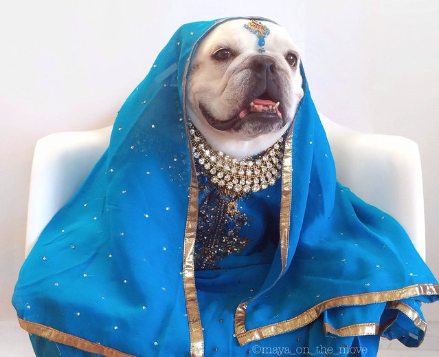 Maya as a bollywood princess. (Photo by Tania Ahsan/Caters News)