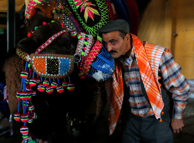 A wrestling camel adorned with colourful ornaments is escorted by his groom as he waits for the Camel Beauty Contest ahead of the annual Selcuk-Efes Camel Wrestling Festival in the Aegean town of Selcuk, near Izmir, Turkey, January 14, 2017. (Photo by Murad Sezer/Reuters)