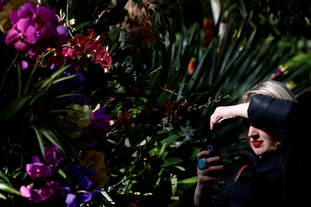 A woman uses her phone to photograph a a display during the annual Orchid Show at the New York Botanical Garden in the Bronx, New York, U.S., February 16, 2017. (Photo by Brendan McDermid/Reuters)