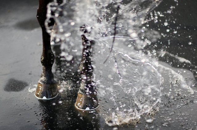 Water is thrown over a runner in the winners enclosure at Wincanton Racecourse on March 9, 2017 in Wincanton, England. (Photo by Alan Crowhurst/Getty Images)