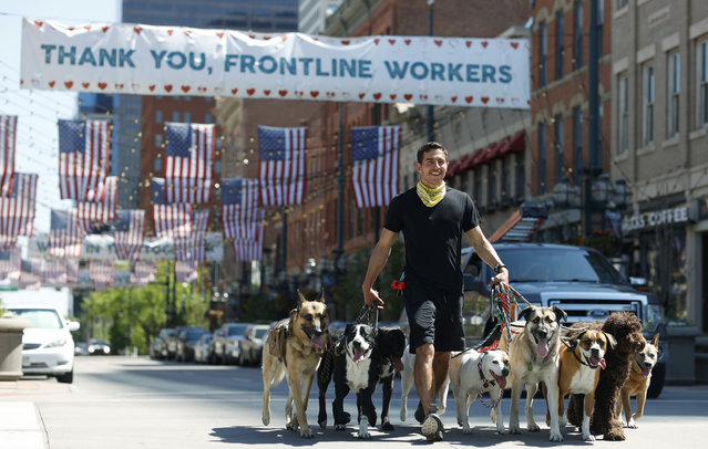 Dogwalker Felix Merino guides nine dogs along Larimer Street as residents remain indoors in Denver despite the lifting of many restrictions to stop the rise of the new coronavirus Tuesday, May 19, 2020. (Photo by David Zalubowski/AP Photo)