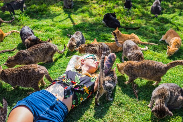 Kitten Lady, 30, is surrounded by rescued cats at the the Lanai Cat Sanctuary in Hawaii. (Photo by Andrew Marttila/Caters News Agency)