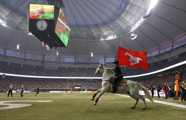 A horse runs across the end-zone after a touchdown by the Calgary Stampeders during the CFL's 102nd Grey Cup football championship against the Hamilton Tiger Cats in Vancouver, British Columbia, November 30, 2014. (Photo by Ben Nelms/Reuters)