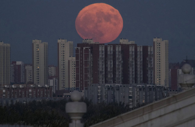 The moon rises from behind apartment buildings in Beijing, China, Monday, November 14, 2016. The brightest moon in almost 69 years will be lighting up the sky this week in a treat for star watchers around the globe. (Photo by Ng Han Guan/AP Photo)