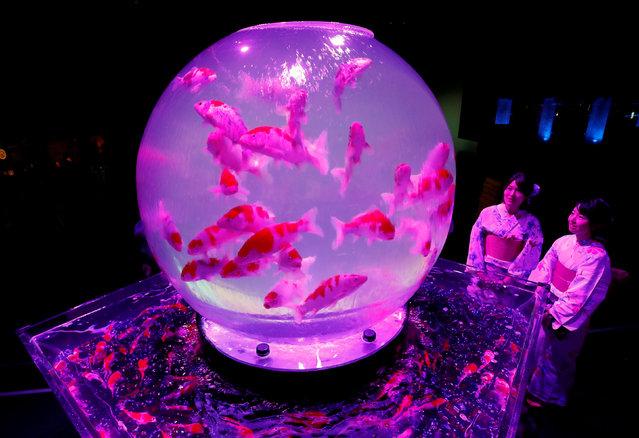 Women wearing traditional costumes look at installations with goldfish in illuminated tanks at Art Aquarium 2018, produced by Japanese Art Aquarium artist Hidetomo Kimura, in Tokyo, Japan, July 5, 2018. (Photo by Kim Kyung-Hoon/Reuters)
