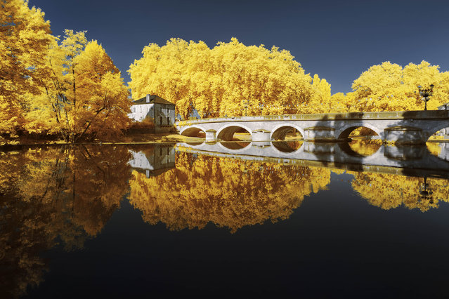 In some of Ferrer's works, the foliage is an eye-catching canary yellow – a stark contrast to the more normal shades of the remainder of the images. (Photo by Pierre-Louis Ferrer/Caters News Agency)