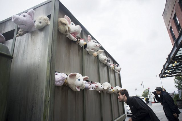 """Banksy enthusiasts flock to the Meatpacking District in New York to see the eleventh installment of Banksys art, """"The Sirens of the Lambs"""", on Oktober 12, 2013. (Photo by Àrances M. Roberts/Photoshot)"""