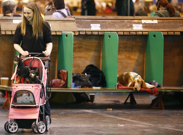 A woman pushes two dogs in a pram during the first day of the Crufts Dog Show in Birmingham, central England, March 5, 2015. (REUTERS/Darren Staples)