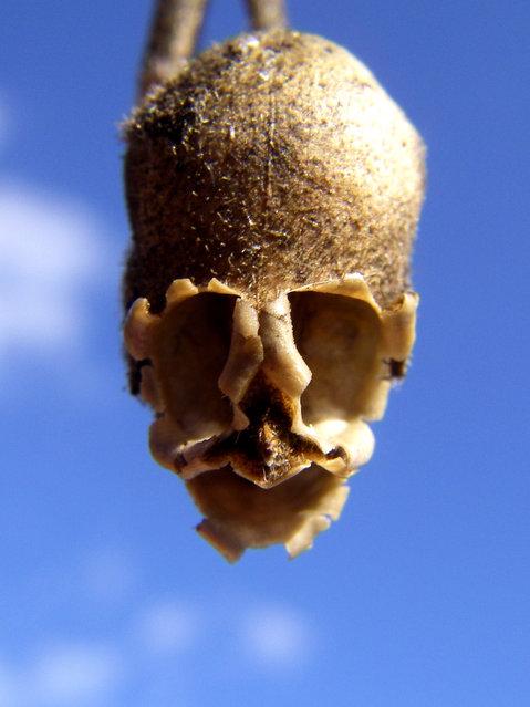 The Dragon's Skull