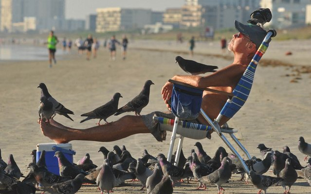 Terry Zittle relaxes on Cocoa Beach in Florida with a few feathered friends, on Oktober 28, 2013. The local resident is renowned as a magnet for pigeons and has even named many of the birds, who flock to him when he brings sunflower seeds for breakfast. (Photo by Tim Shortt/AP Photo/Florida Today)