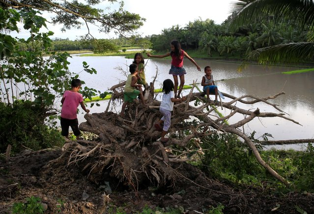Childrens play at a tree uprooted by strong winds brought by Typhoon Nock-ten which cut through Camarines Sur, Bicol region, central Philippines December 26, 2016. (Photo by Romeo Ranoco/Reuters)