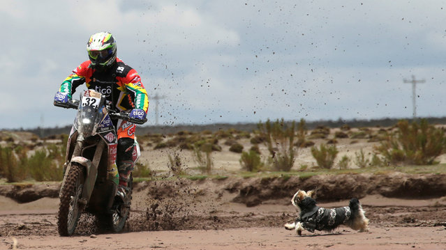 2017 Paraguay-Bolivia-Argentina Dakar rally, 39th Dakar Edition, Seventh stage from Oruro to Uyuni, Bolivia on January 9, 2017. Juan Salvatierra of Bolivia rides his KTM. (Photo by Ricardo Moraes/Reuters)