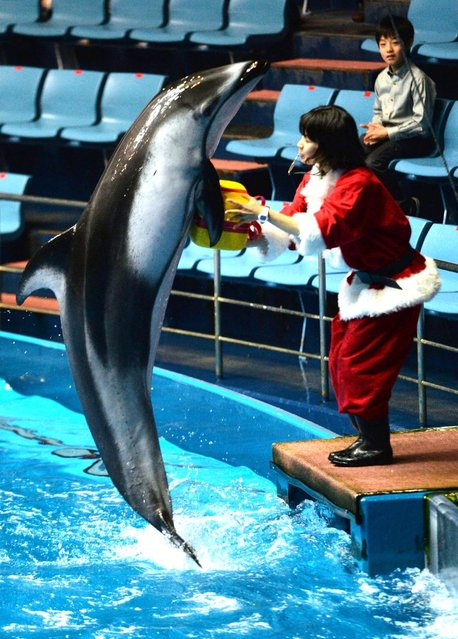 """A dolphin leaps out of the water to pass a """"gift"""" package to an animal trainer wearing a Santa Claus costume during a show at the Aqua Stadium aquarium in Tokyo on December 18, 2013. (Photo by Yoshikazu Tsuno/AFP Photo)"""