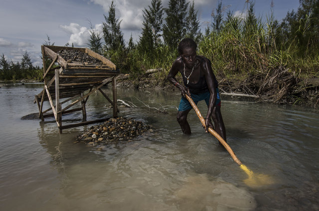 A illegal gold miner of Kamoro people, sift through sand and rock as they pan for gold on February 4, 2017 in Timika, Papua Province, Indonesia. (Photo by Ulet Ifansasti/Getty Images)