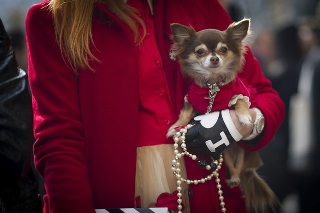A guest seen carrying a dog outside the Chanel show with a dog on March 4, 2014 in Paris, France. (Photo by Timur Emek/Getty Images)