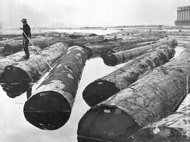 1935: Logs being sorted for distribution to Pacific Mills Ltd pulpmill at Ocean Falls, British Columbia