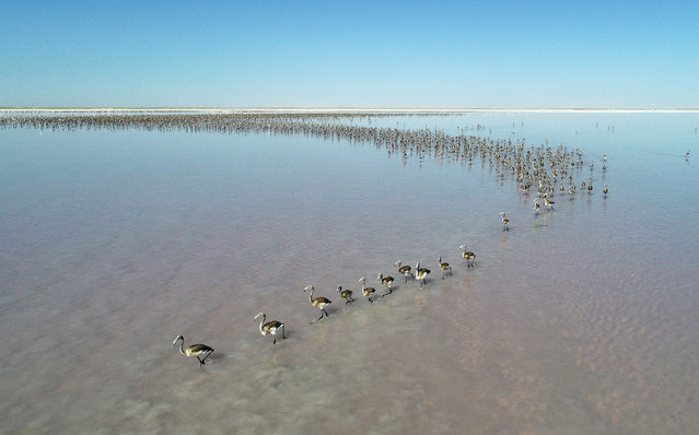 A drone photo shows flamingos on Lake Tuz, one of the most important center that flamingos incubate, in Konya province of Turkey on July 09, 2019. (Photo by Murat Oner Tas/Anadolu Agency/Getty Images)