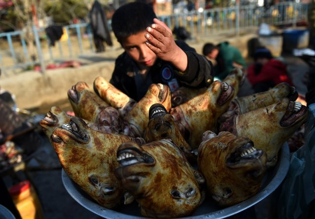 A young Afghan vendor waits for customers to buy sheep's heads at a roadside stall at the busy market in Kabul on November 29, 2015. (Photo by Wakil Kohsar/AFP Photo)