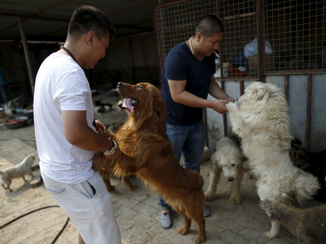 Visitors play with rescued dogs at a shelter ran by Yang Xiaoyun in Tianjin, China, July 8, 2015. (Photo by Kim Kyung-Hoon/Reuters)