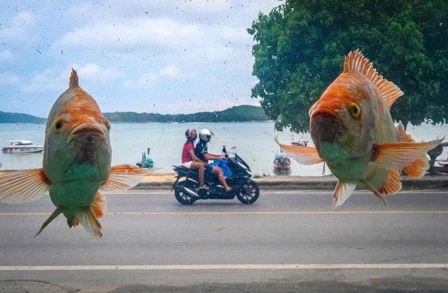 This photograph taken trough an aquarium shows the Ra Wai Beach on Phuket island, Thailand on October 2, 2019. (Photo by Mladen Antonov/AFP Photo)