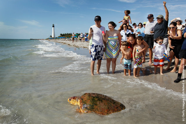 People watch as one of two loggerhead sea turtles are released back into the wild at Bill Baggs Cape Florida State Park after they underwent rehabilitation at Miami Seaquarium