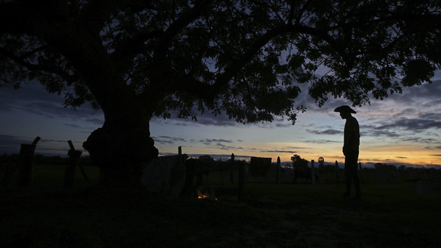 In this May 17, 2017 photo, a cowboy stands under a tree at dusk on a farm in Corumba, in the Pantanal wetlands of Mato Grosso do Sul state, Brazil. Working as a cowboy is still a way of life in rural areas of Latin America's largest nation and is reasonably well-paying for the region. (Photo by Eraldo Peres/AP Photo)