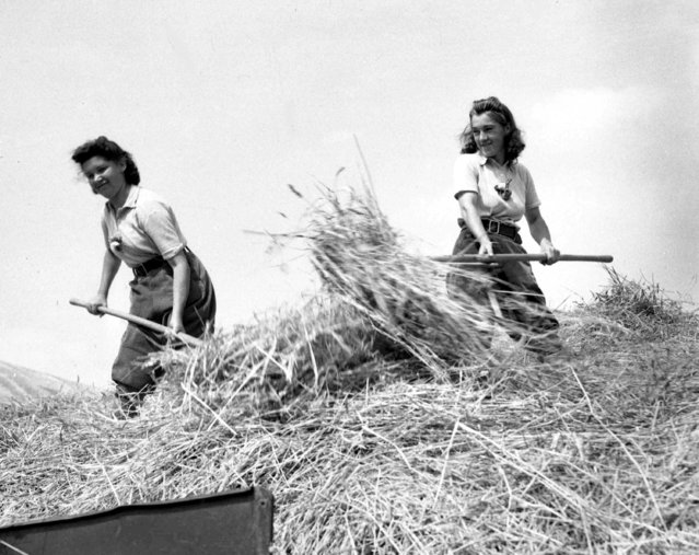 Some of Britain's Land Army girls help to pitch straw from a rick into a thatch-making machine, at a farm, somewhere in England, May 31, 1943. (Photo by AP Photo)