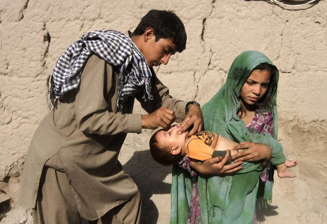 A child receives polio vaccination during an anti-polio campaign on the outskirts of Jalalabad August 18, 2014. (Photo by Reuters/Parwiz)