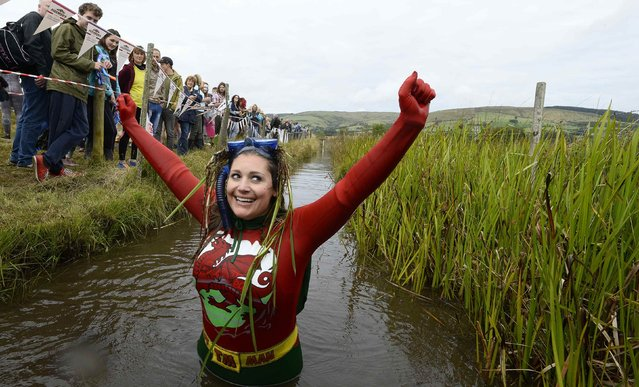 Joanna Parker celebrates finishing in the World Bog Snorkelling Championships at Waen Rhydd bog on the outskirts of LLanwrtyd Wells, Powys, Wales August 24, 2014. The annual event, where competitors swim in a marshy trench with flippers and a snorkel, brings together participants from all over the world, including France, Germany, Australia, New Zealand, the U.S. and Canada. (Photo by Rebecca Naden/Reuters)