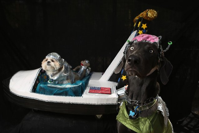 Weimeraner Zeus and Pachino, a shih tzu,  pose with their space ship at the Tompkins Square Halloween Dog Parade on October 20, 2012 in New York City