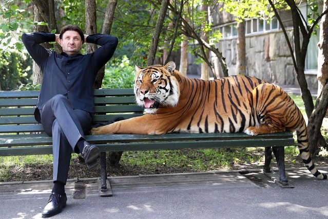 Edgard Zapashny, general director of the Great Moscow State Circus, and a tiger sit on a bench by a staff entrance to the Great Moscow State Circus in Moscow, Russia on June 23, 2020. (Photo by Vyacheslav Prokofyev/TASS)