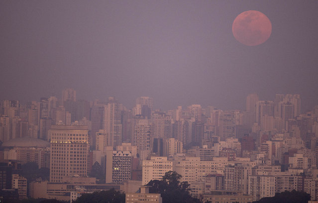 A supermoon rises over the skyline in Sao Paulo, Brazil, Saturday, August 29, 2015. The phenomenon, which scientists call a perigee moon, occurs when the moon is near the horizon and appears larger and brighter than other full moons. (Photo by Andre Penner/AP Photo)
