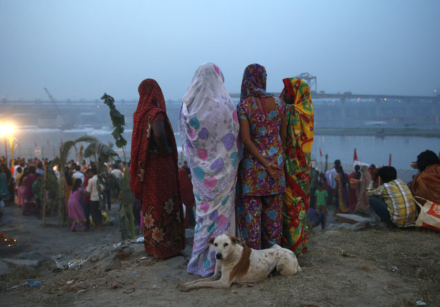 Hindu Women stand near a dog as they prepare to worship the Sun god Surya on the banks of the river Yamuna during the Hindu religious festival of Chatt Puja in New Delhi October 29, 2014. (Photo by Ahmad Masood/Reuters)