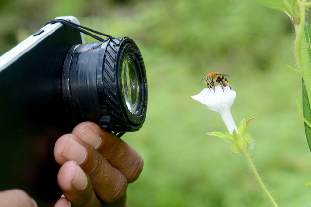 Komang,30, from Karangasem regency,Bali, Indonesia taking macro images using his Samsung Galaxy J7 and homemade camera lens. (Photo by Komang Wirnata/Caters News Agency)