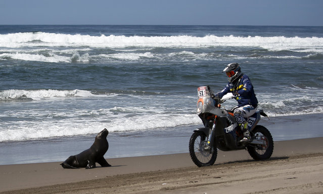 Dutch driver Hans Jos Liefhebber on his KTM drives next to a seal during the fifth stage of the 2018 Dakar Rally, between San Juan de Marcona and Arequipa, on the beach of Puerto Lomas, Peru, 10 January 2018. The 2018 Dakar says goodbye to the dunes with its fifth and final stage over the Peruvian desert and begins to take height as it enters the Andean mountain range, heading for Bolivia. (Photo by David Fernandez/EPA/EFE)
